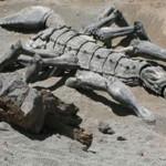 В Шотландии найден самый большой скорпион в мире