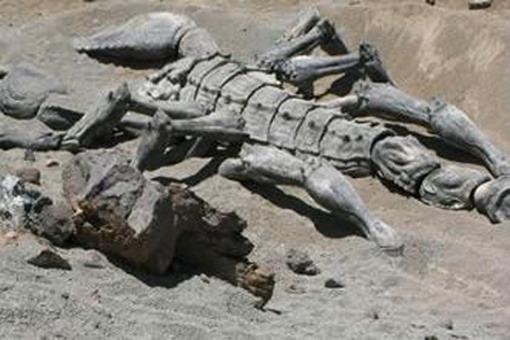 самый большой скорпион