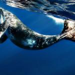 Голубой кит — самое большое животное в мире
