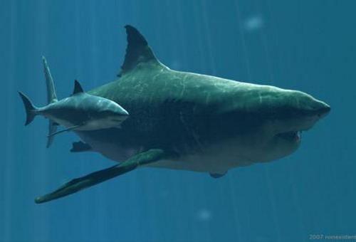 Самая большая акула в мире – мегалодон