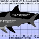 Мегалодон — самая большая акула в мире