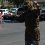 Матка пчелы помогает ими управлять