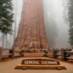 Секвойя генерал Шерман — cамое большое дерево в мире