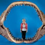 Челюсть акулы за миллион долларов