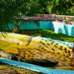 Sarcosuchus imperator — самый большой крокодил в мире
