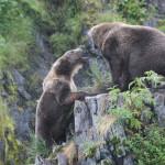 Кадьяк — самый большой медведь в мире