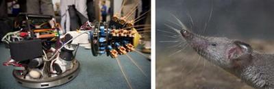автоматические аппараты Shrewbot