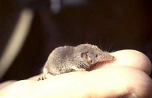 Самое маленькое животное в мире | Самое интересное  Самое Маленькое Животное в Мире