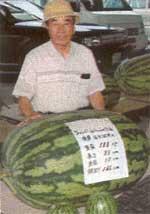 Акинори Такамицу и один из его арбузов