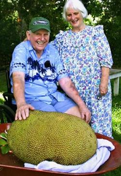 Семейная пара Шатауэр со своим гигантским джекфрутом