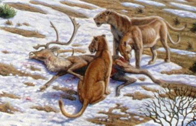 Пещерный лев (Panthera leo spelaea)