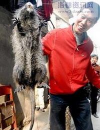 Китаец Сянь и пойманная им гигантская крыса