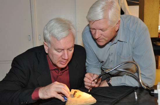 Биологи Брюс Арчибальд и Рольф Мэтьюс исследуют Titanomyrma lubei