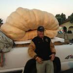 Три самые большие тыквы в мире