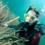 Посидония океаническая — самое большое растение в мире (8 фото)