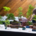 Травянистая ива — самое маленькое дерево в мире