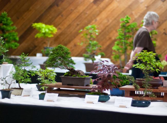 Травянистая ива - самое маленькое дерево в мире | Самое ...  Самое Маленькое Животное в Мире