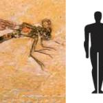 Meganeuropsis permiana — самое большое насекомое в мире