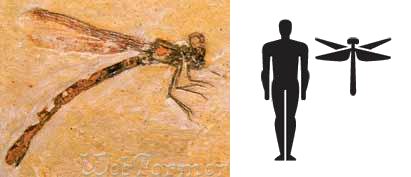 Permiana самое большое насекомое в мире