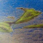 Пантанал — самое большое болото на планете