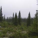 Сибирская тайга – самый большой лес в мире