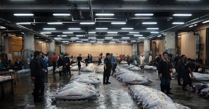 The Tsukiji Market3