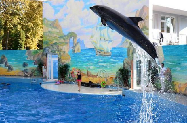 Сочинский городской дельфинарий.