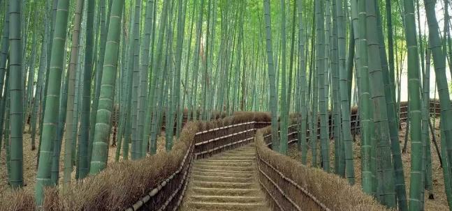 forest-sagano-4