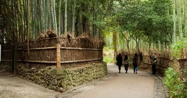 forest-sagano-5