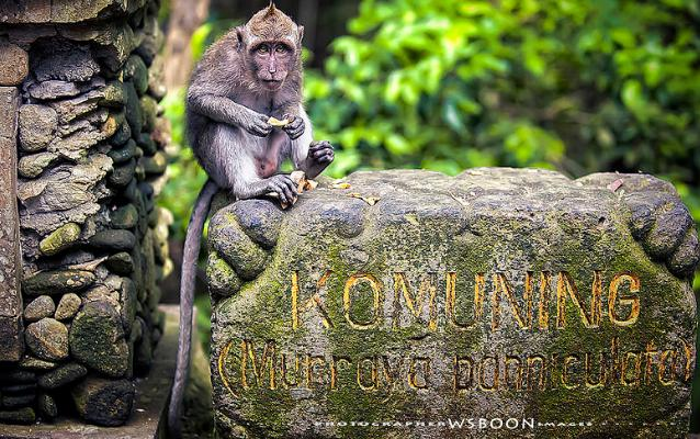 monkey-forest-bali-1