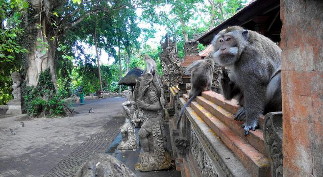 monkey-forest-bali-2