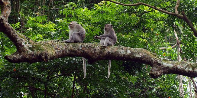 monkey-forest-bali-4