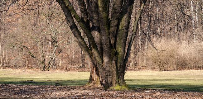 park-tiergarten-4