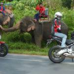 5 интересных фактов, которые убедят вас посетить Чиангмай